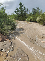 A desert thunderstorm's aftermath's ephemeral watercourse's gathering foam. (Tim Kiser) Tags: 2015 20151006 arizona arizonalandscape goldengateroad img7158 october october2015 pimacounty pimacountyarizona saguaronationalpark saguaronationalparkwest saguaronationalparklandscape saguaroparkwest tucsonmountaindistrict tucsonmountaindistrictlandscape tucsonmountaindistrictofsaguaronationalpark tucsonmetropolitanarea afterarain afterrain arroyo arroyolandscape desert desertlandscape desertplants desertwash desertwater ephemeralstream flashflood flowingwater foam foamywater landscape lineoffoam muddywater nationalpark nationalparklandscape park rainaftermath southarizona southeastarizona southeasternarizona southernarizona stormcloud thunderstorm thunderstormaftermath thunderstormlandscape view wash washlandscape