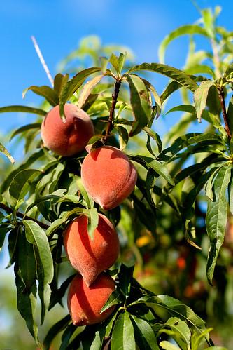 More Peach