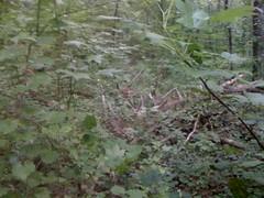 30 - Trail