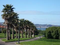 Palmeras en El Rinconin (ashtur2000) Tags: parque espaa palms gijn asturias panasonic palmera elrinconin principadodeasturias mygearandmepremium mygearandmebronze mygearandmesilver