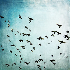 Baha'i Rights Day - July 11th (Shahriar Erfanian) Tags: birds freedom flying explore rights bahai awareness humanrights frontpage bah shahriarerfanian bahairights
