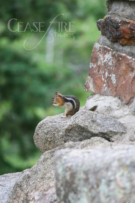 07-12-squirrels2