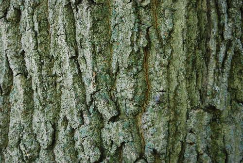 Tree Bark Texture 02