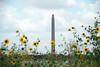 San Jacinto Monument (faungg's photos) Tags: travel flowers wild monument yellow us texas houston landmark column 旅游 colum tallest 美国 南方 休斯顿