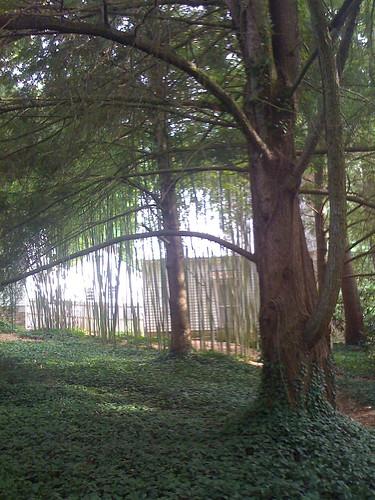 Carl Sandburg Park