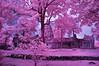Phanom Rung In Infrared Purple Hues (aeschylus18917) Tags: red sky tree architecture landscape ir thailand nikon ruins scenery shrine khmer d70 nikond70 surreal infrared nikkor hindu infra 1870mm pxt buriram phanomrung f3545g isan 1870 赤外線 ราชอาณาจักรไทย 1870f3545g prakhonchai prasathinphanomrung บุรีรัมย์ อีสาน ダニエル ratchaanachakthai ปราสาทหินเมืองต่ำ nikkor1870f3545g prasathinmueangtam danielruyle aeschylus18917 danruyle druyle ปราสาทหินพนมรุ้ง ルール ダニエルルール ประโคนชัย 1870mmf3545gifdx prasathinmuangtum stonecastleofthehumblecity nikkor1870f3545gdx