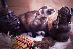 IMG_7110-Edit (jrcicolani) Tags: pet peru ferret pipe traveller pan huaco