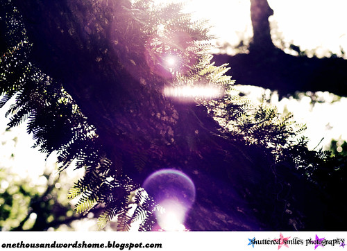 tree flaregasm