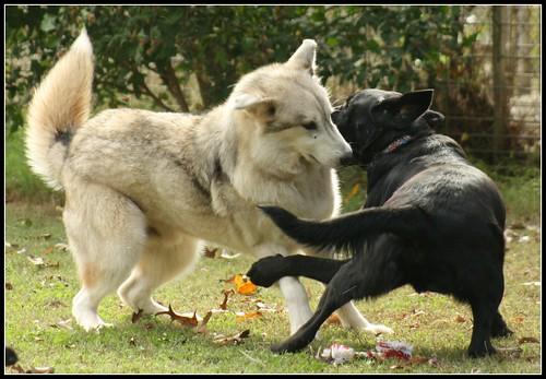Dancing Dogs - IMG_6791 - ZOOM