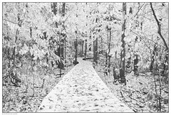 Winter Skin (Ben Heine) Tags: trees blackandwhite bw mountain canada cold texture nature monochrome leaves forest season quebec path montreal biosphere romance unesco oxygen growth arbres simplicity romantic greenbelt minimalism breathe geotag froid chemin fort feuilles endangeredspecies saison naturalreserve montsainthilaire winterskin protectedarea benheine thesuperbmasterpiece richelieuvalley hubzay flickrunited mountsainthilaire lavalledurichelieu