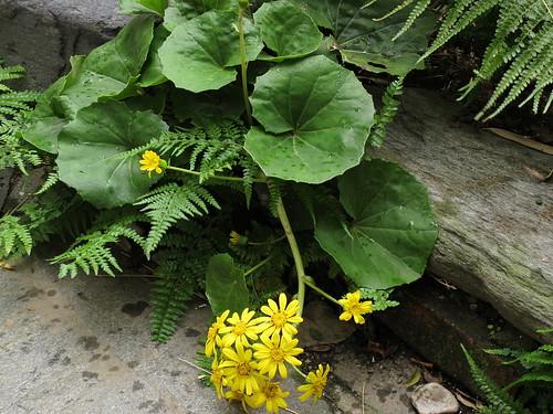 Flower-079
