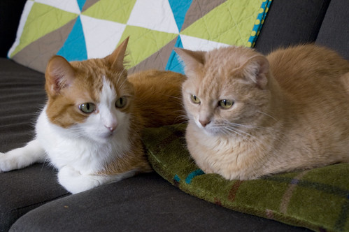 new winter pillows for the kitties