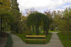 Padova: albero e panchina (Gaspa) Tags: sanantonio padova ortobotanico ilprato