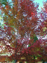 Fall Colors Boulder   DSCN0278