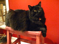 Huggy Bear perched on the stool