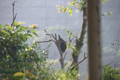 DSC_1297 (aquaboy24) Tags: africa sierraleone westafrica freetown