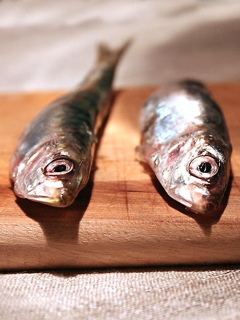 sardine_2