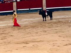 Spain library - 0792 (ritabk1966) Tags: madrid spain bullfight bullfighting lasventas