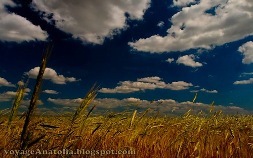 Golden Fields near Ankara by voyageAnatolia.blogspot.com