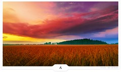 Colorstorm (Gert van Duinen) Tags: landscape wheat digitalart dramatic landschaft frontpage cornflakes dri landschap dutchartist landschaftsaufnahme gertvanduinen explore15on20090721