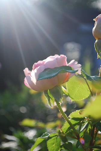 Garden at Morning Light (4)