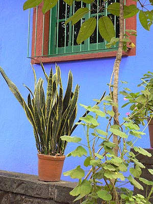 plante et fenêtre.jpg