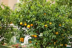 s a narancs is rik (AZso) Tags: schnbrunn vienna wien stephansdom 2009 hofburg bcs nszt privt
