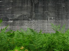 Snowshed back wall with greenery