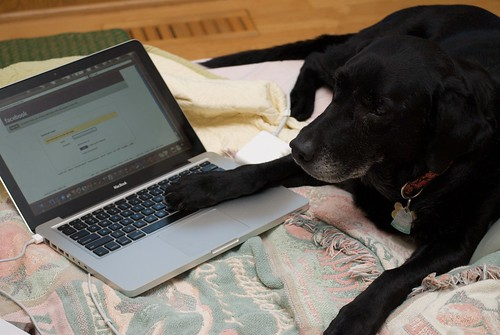 Libby's Secret Addiction to Facebook by pmarkham, on Flickr