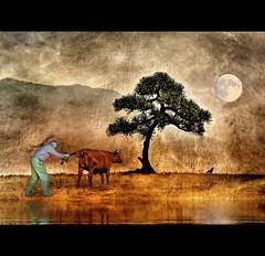 Catching the Cow  -  III (h.koppdelaney) Tags: life light art digital photoshop self cow energy symbol path buddhism philosophy ox story zen mind bonsai meditation wisdom quest awareness consciousness symbolism psychology prana archetype libido graphicmaster
