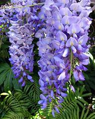 Cascade in Blues (Mary Faith.) Tags: newgoldenseal
