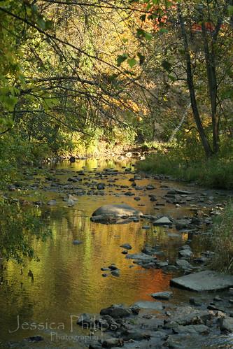 Waterfall Glen Oct2009 015 web