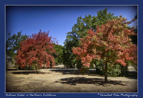 Autumn Color in Northern California