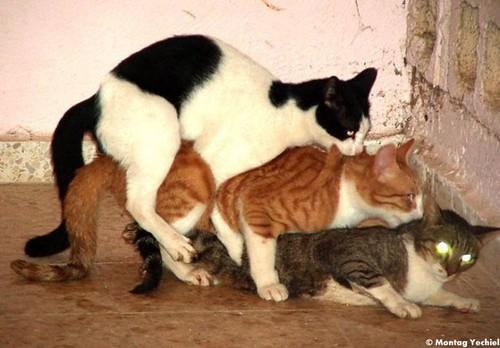 Partouze animale (3) par vous