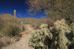 IMG_9519 (simon_travelboy) Tags: arizona tucson saguaronationalpark