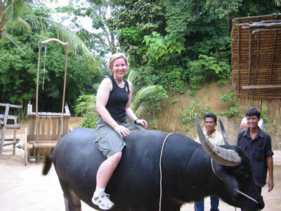 Buffalo tours in Vietnam
