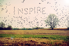 Inspire (SOMETHiNG MONUMENTAL) Tags: tree nature field birds flying nikon farm country flight inspire d60 somethingmonumental mandycrandell