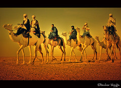 Los Ganadores ! (Bashar Shglila) Tags: sunset sun hot sahara algeria desert sony racing explore camel caravan libya camels dsc participate tuareg algerian libyan ghadames libia libyen الجزائر صحراء inthemood سباق ليبيا explored líbia مهرجان libië libiya الابل liviya libija طوارق либия hx1 الهجن توارق olétusfotos dschx1 ливия ورقلة ☆thepowerofnow☆ լիբիա ลิเบีย lībija либија lìbǐyà libja líbya liibüa livýi λιβύη לוב تينيري المهاري uargla ايموهاغ هقار