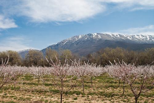 Untersuchungsgebiet Plantage und Galicica