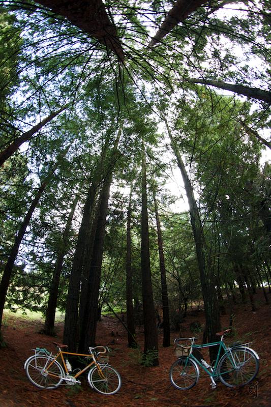 baby tree grove