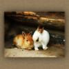 happy together ('pixler') Tags: friends cute bunnies zoo hare enclosure rabits cuddley blueribbonwinner supershot abigfave platinumphoto goldstaraward vosplusbellesphotos bestofmywinners
