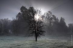 white christmas, bit of fog and frost (louie imaging) Tags: christmas trees winter light sun sunlight white tree field grass fog forest landscape bay san francisco frost day scene area rays wonderland magical flickrdiamond