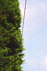 Trees, Sky, Wire (ibkc) Tags: trees sky 35mm georgia minoltasrt101