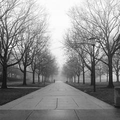 untitled-10-Edit-2 (dvlmnkillatron) Tags: mediumformat selfdeveloped yashicamat124 120 6x6 analog film square champaign urbana universityofillinois fog sidewalk twinlensreflex tlr