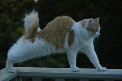 stretch! (cookienmishy) Tags: boy ginger cookie stretch verandah