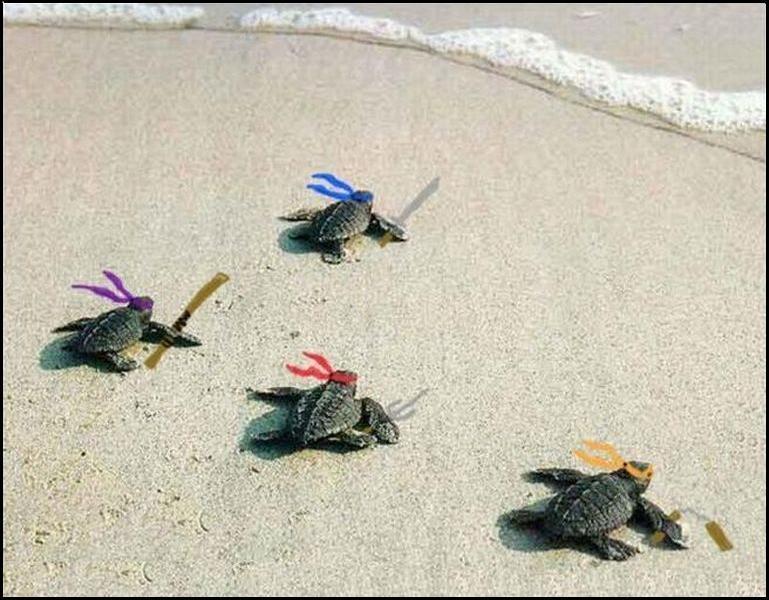 忍者龜來了