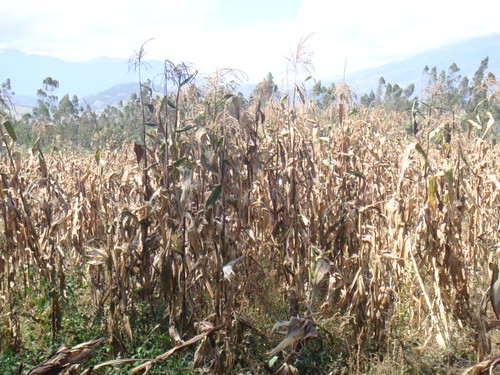 3726877620 99abe18157 Ecuador Coffee Farm for Sale