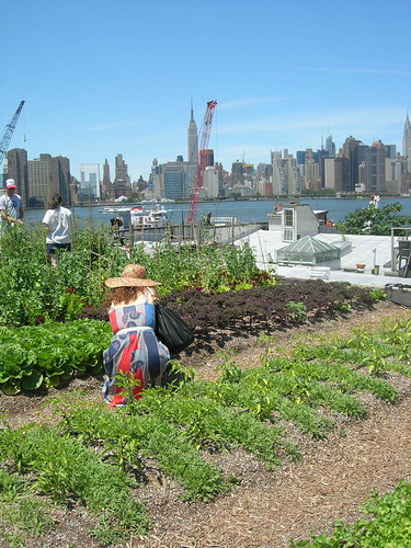 Rooftop Farm in Greenpoint