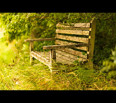 ~ Still Forgotten Again ~ (bench/seat) (Komatoes) Tags: park wood trees green grass bench 50mm weeds nikon f14 g seat explore devon forgotten exeter valley lichen nikkor f18 56 afs 50mmf14 ludwell d40 nikond40 benchkeh