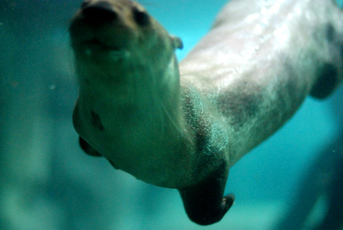 r TN Aquarium 255